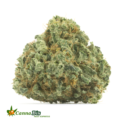 cannabis high blue champagne