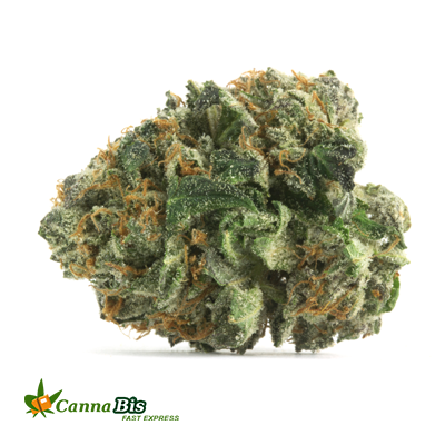 Order OG Kush from Cannabis Fast Express